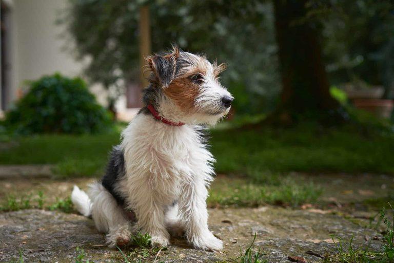 Il cane, è il miglior amico dell'uomo
